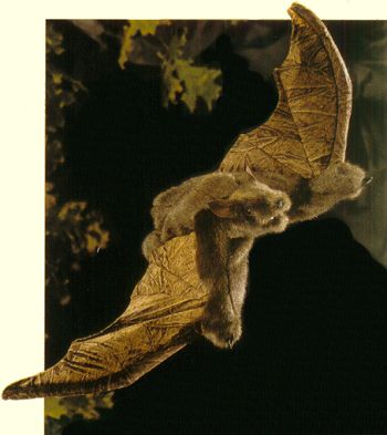 Stuffed Bat