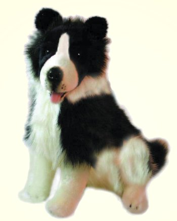 Tommy the Stuffed Border Collie