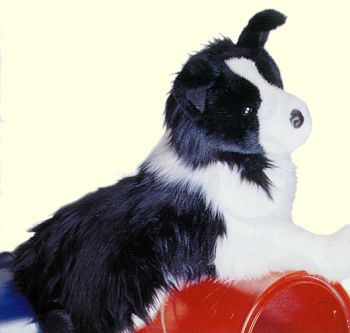 Stuffed Border Collie