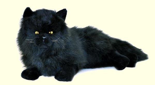 Stuffed Black Persian Cat