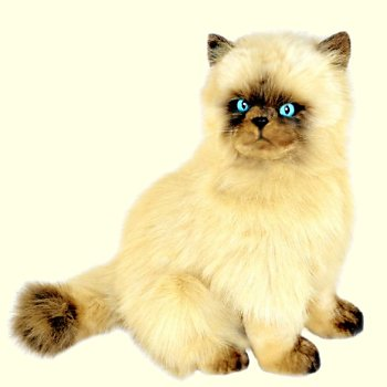 Stuffed Himalayan Cat