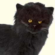 Bocchetta Sheffield Standing Persian Cat