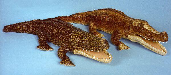 Stuffed-Crocodile