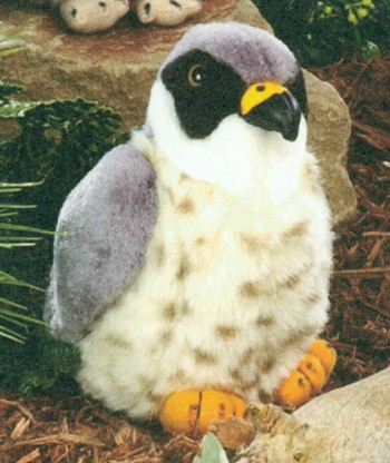 Stuffed Peregrine Falcon