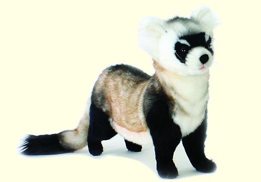 stuffed toys - Stuffed Ferret - Wildlife