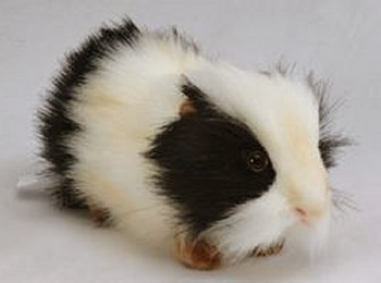 Stuffed Plush Black and White Guinea Pig