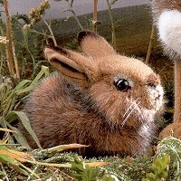 Stuffed Baby Field Rabbit