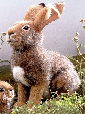 Stuffed Adult Field Rabbit