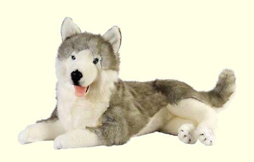 Rocco the Stuffed Siberian Husky
