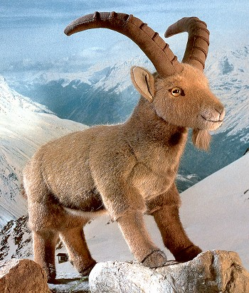 Stuffed Ibex