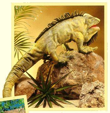 Stuffed Iguana