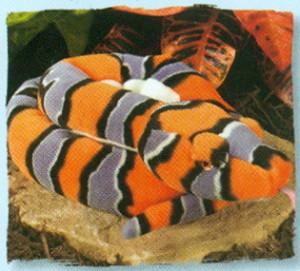 Stuffed-Kingsnake