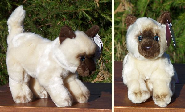 Stuffed Siamese Kitten