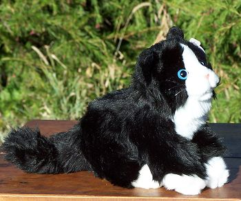 Stuffed Black and White Cat