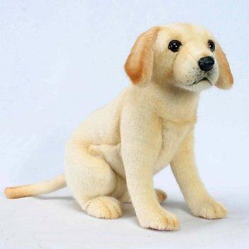 Sitting Yellow Labrador Puppy