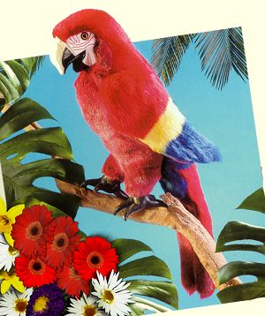stuffed toys - Stuffed Macaw - Birds