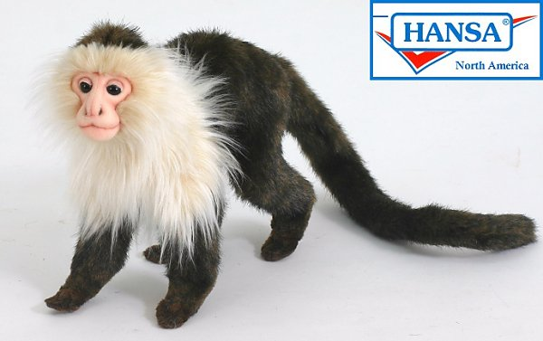 Stuffed Capuchin Monkey