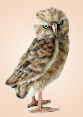 Stuffed Burrowing Owl