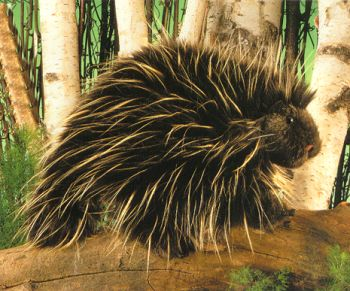 Stuffed Porcupine