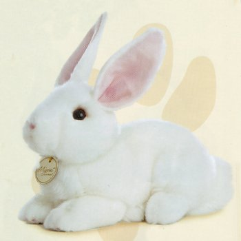 Stuffed White Rabbit