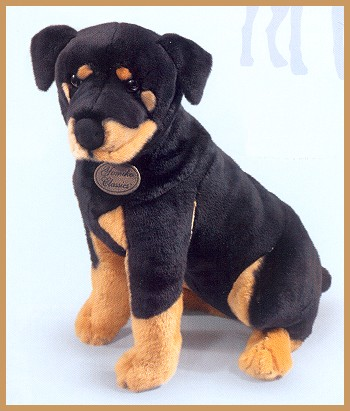Long Haired Rottweiler Puppies. 18 Inches Long.