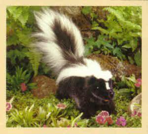 Stuffed Skunk