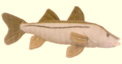 Stuffed-Snook