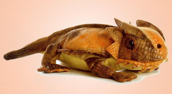 Aurora Stuffed Plush Horned Toad
