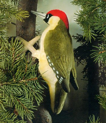 stuffed toys - Stuffed Woodpecker - Birds